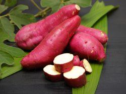 芋焼酎の品種「さつまいも」を知ろう♪「芋」で変わるおいしい発見!