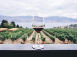 【朗報】2019年2月からワインが安くなる!?EPAでEU輸入関税撤廃って一体!?