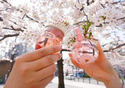 【お花見】するならこのお酒がおすすめ♪五感で楽しむ春の呑んべぇ