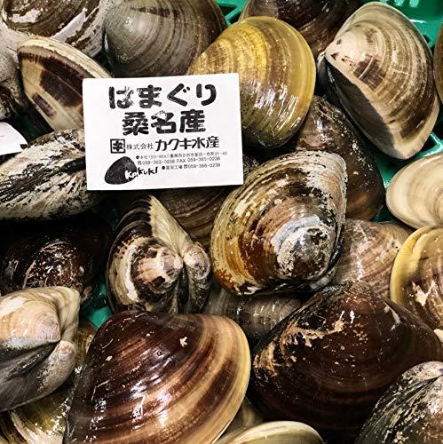 天然 桑名ハマグリ 最高級 蛤 豊洲直送 500g(1個約100g)【桑名はまぐり500g】冷蔵