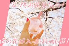 家でもお花見気分!桜の花が入った春に飲みたい季節のお酒6選!